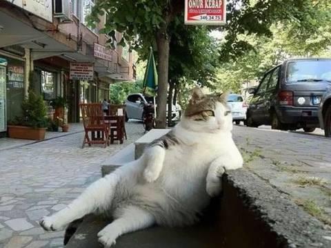 ありひのニャンコ…イスタンブールもトルコリラ暴落でたいへんだにゃ~ん