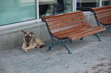 ロシアの野良犬。。。