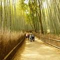 Photos: 嵐山の竹の道@京都20120517