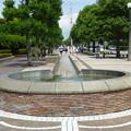 写真: 三笠公園通り@横須賀20150607