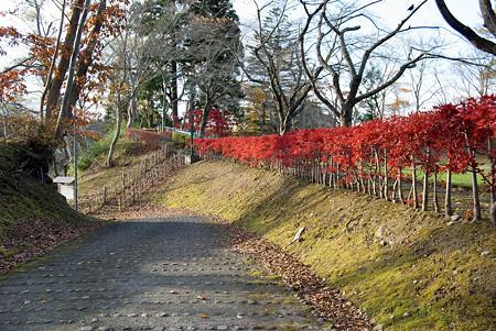 公園の垣根