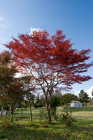お堀の側の紅葉