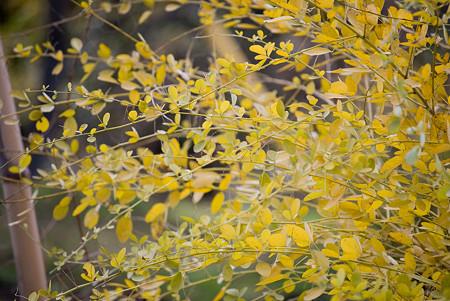 黄色い葉っぱ