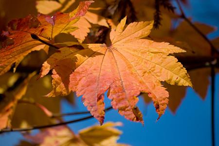 鮮やかな葉っぱ