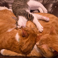 写真: 最上の枕