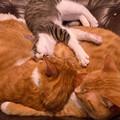 Photos: 最上の枕