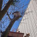 写真: もう恒例になった木登り