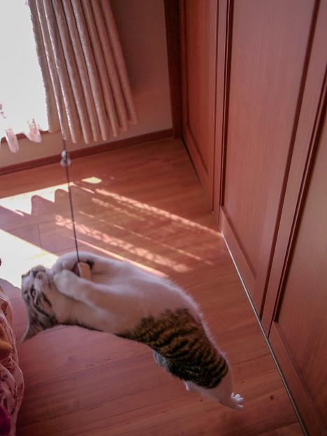 猫の海老反り!