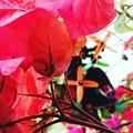写真: 花とプロペラ