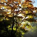 2015富士山麓の秋20「色変わり始まる」