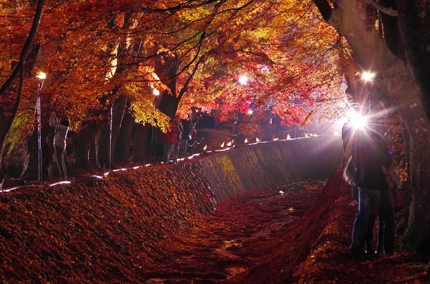 2015富士山麓の秋144