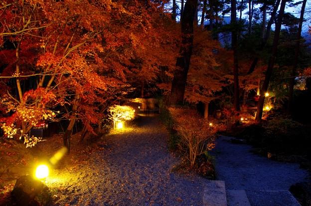 2015富士山麓の秋141