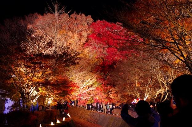 2015富士山麓の秋151
