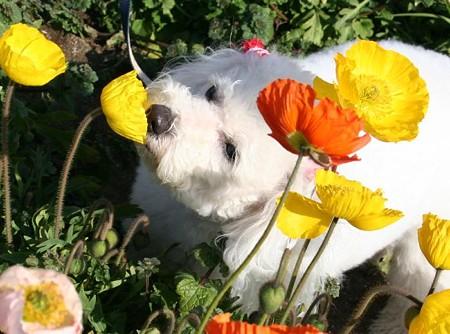 お花にちゅっ・・・