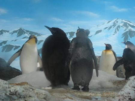 ペンギンの親子?