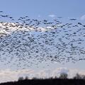 渡り鳥と飛行機