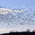 渡り鳥と飛行機-1