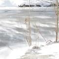 Photos: 風雪
