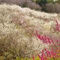 写真: 花の斜面