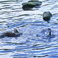 Photos: 水浴び