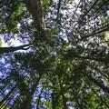 杉の森を抜けて