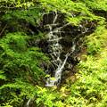 Photos: 釜沢の滝