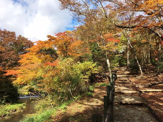 紅葉が美しい散策路