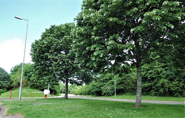 駐車場の植栽