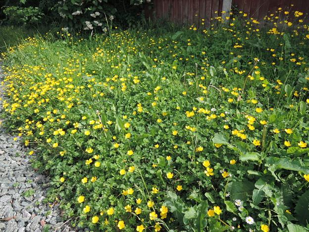 道ばたの花