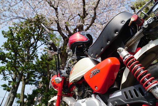 Photos: 桜を愛でに