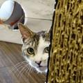 写真: 覗き猫
