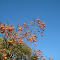 Photos: 秋も終わりですね
