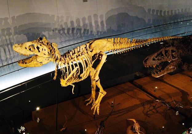 ティラノザウルス骨格