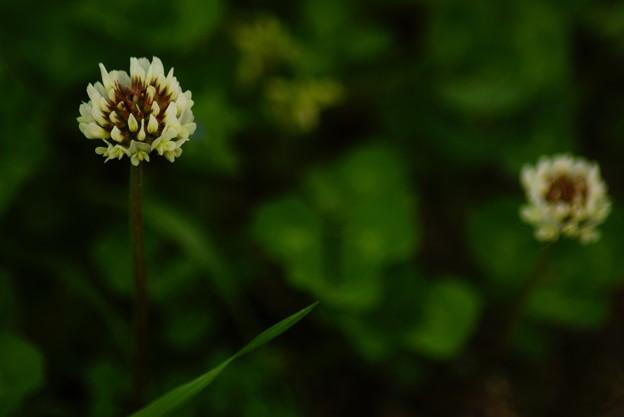道辺の花 (3)