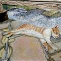 写真: 雲仙の猫