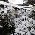 我が家の雪