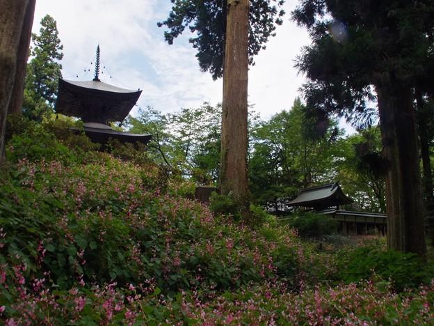 秋海棠の寺