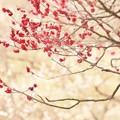 Photos: 春は朧に
