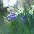 Photos: 春の花さく頃