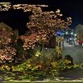 熱海桜 ライトアップ 360°パノラマ写真(2) HDR