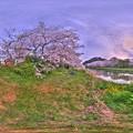 牧之原市 勝間田川の桜 360度パノラマ写真(1) HDR