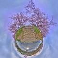 牧之原市 勝間田川の桜 Little Planet(2) HDR