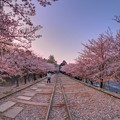 写真: 京都 蹴上 インクライン 桜