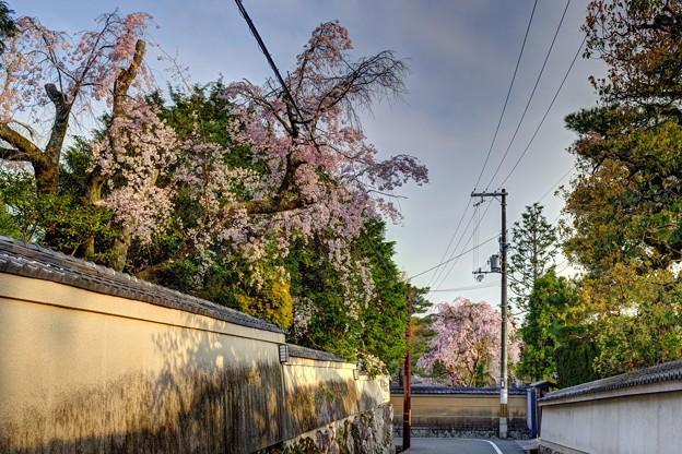 南禅寺界隈 桜