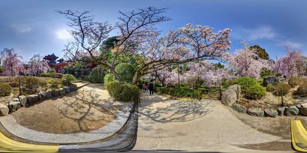 平安神宮 桜 360度パノラマ写真〈1〉