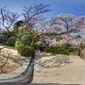 Photos: 平安神宮 桜 360度パノラマ写真〈1〉