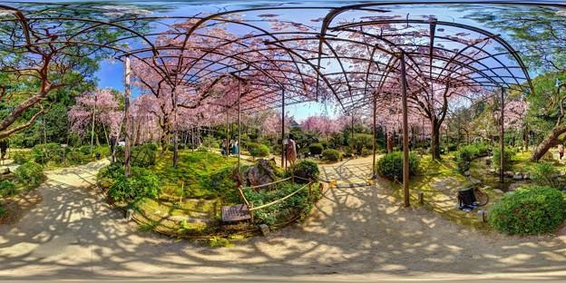 平安神宮 桜 360度パノラマ写真〈2〉