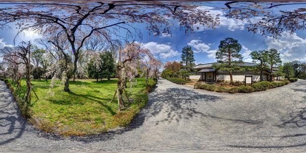 二条城 桜 360度パノラマ写真〈1〉