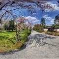 Photos: 二条城 桜 360度パノラマ写真〈1〉