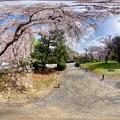 Photos: 二条城 桜 360度パノラマ写真〈2〉